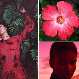 罂粟粉色 - 拉美色彩警报